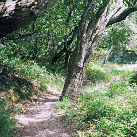 a path, bushes, and trees in Junipero Serra Park