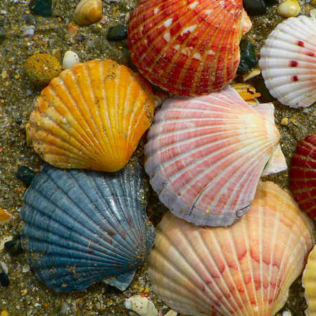 Shells_SandyAustin