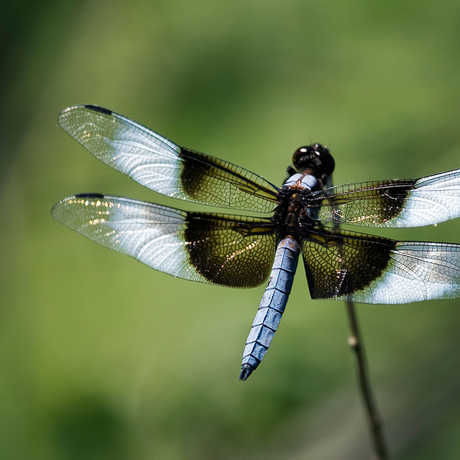Dragonfly_JohnWright