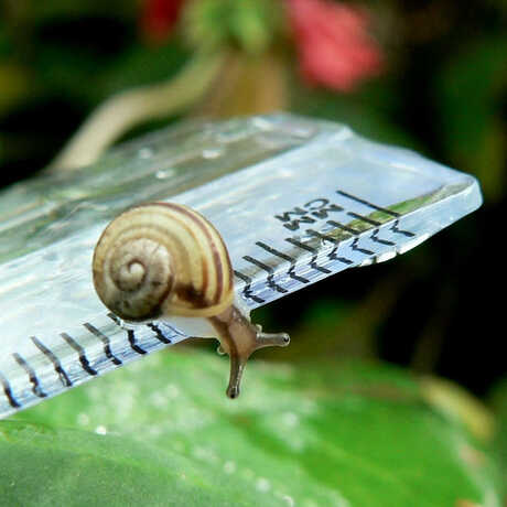 snail on ruler