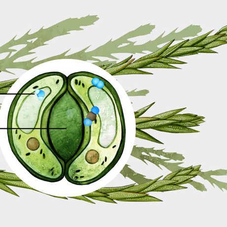 bioGraphic illustration by Jane Kim