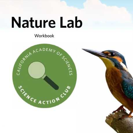 Nature Lab Workbook title page from Science Action Club, with a kingfisher and a caterpillar.