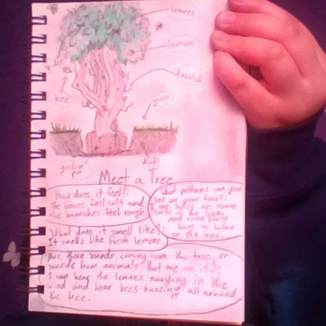 Meet a Tree Student Notes