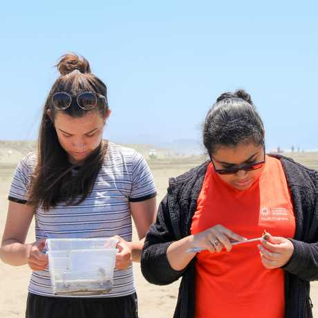 sand crabbing limpets interns
