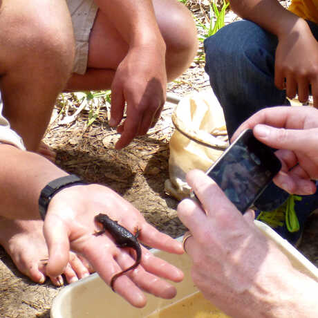 Youth Conducting Citizen Science