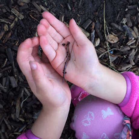 child holds an earthworm softly in their hands after investigating outdoors