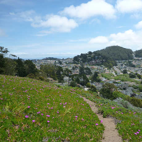 San Francisco Biodiversity