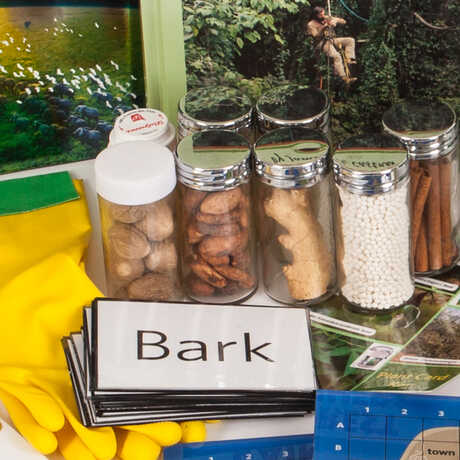 Rainforest Kit Activity