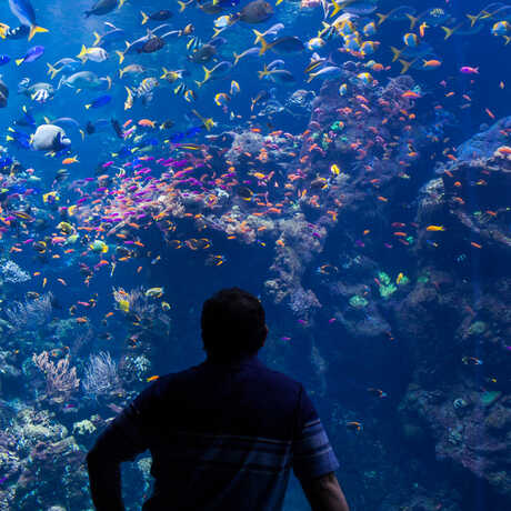 A guest in silhouette gazes at the Philippine Coral Reef tank