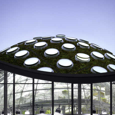 External image of the Living Roof and the Rainforests of the World exhibit.