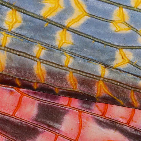 Macro photo of a colorful locust wing