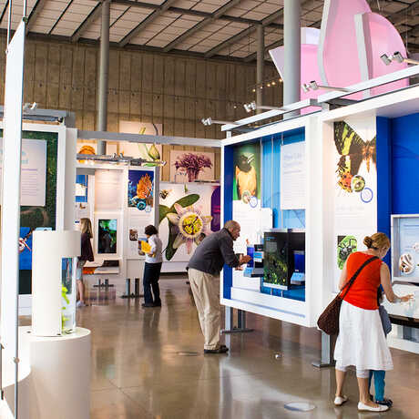 Color of Life exhibit