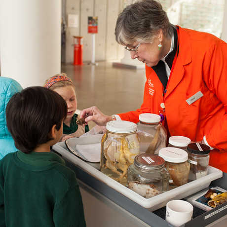 A docent shows young visitors some specimens in jars.