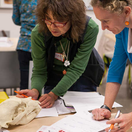 Educators learn about an animal skull