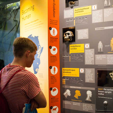 A visitors reads the timeline detailing our species' various migrations.