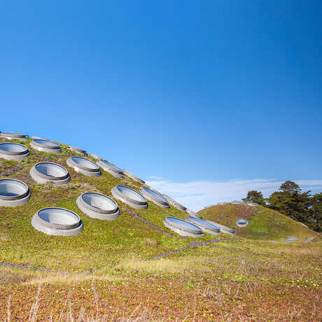 The Living Roof