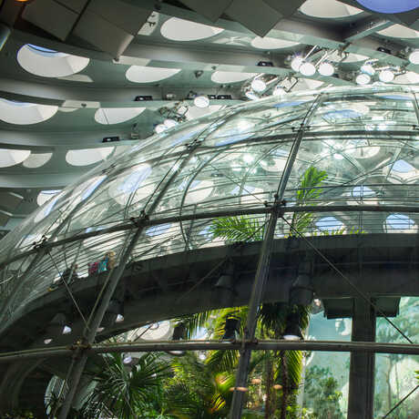 An image of the exterior of the dome, reflecting the many round windows in the living roof above.