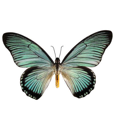 Image of a blue and black butterfly