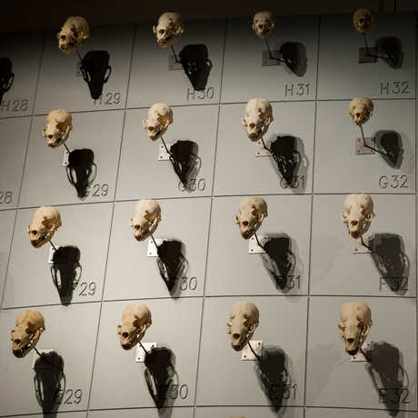 "More than 400 sea lion skulls adorn the ""Sea of Skulls"" wall."