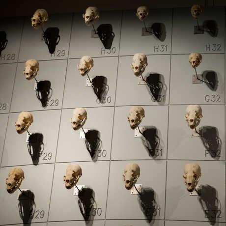 """More than 400 sea lion skulls adorn the """"Sea of Skulls"""" wall."""