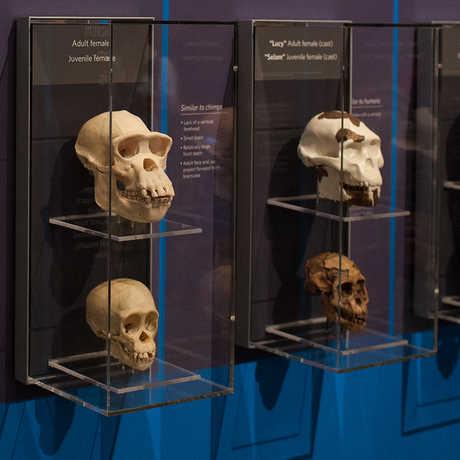 Skulls exhibit