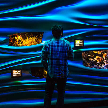 Flowing walls and jewel tanks in the Academy's Water Planet exhibit