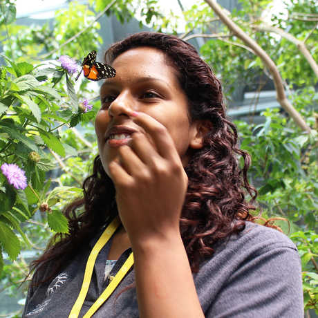 A young woman examines a butterfly in the Rainforests of the World exhibit.
