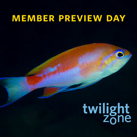 Twilight Zone Member Preview Day