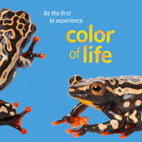 Color of Life Preview on June 11