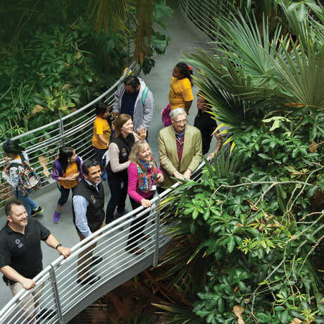 Guests and Academy staff look up at fluttering butterflies inside the rainforest dome
