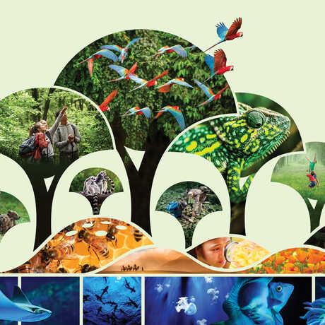 Illustration of forest canopy, mountains, and ocean with animal photo mosaic