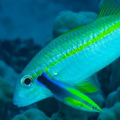 Fish Blog