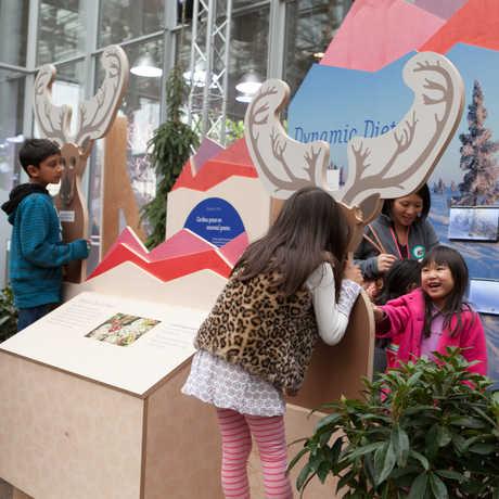 Reindeer exhibit display