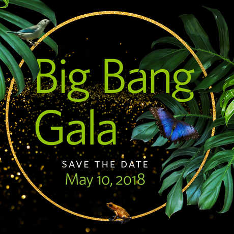The Academy's annual Big Bang Gala will be held on May 10, 2018.