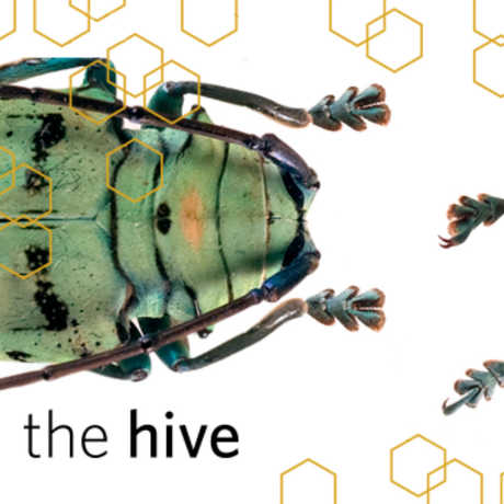 close up of colorful beetles with the Hive logo
