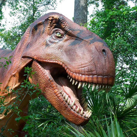 Animatronic T. rex with jaws agape peers through the trees
