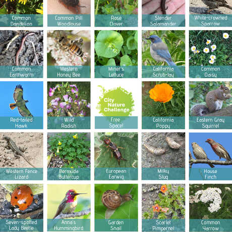 Bingo card with Bay Area plants and animals