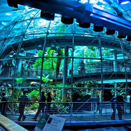 Rainforest exterior