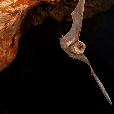 bat in cave