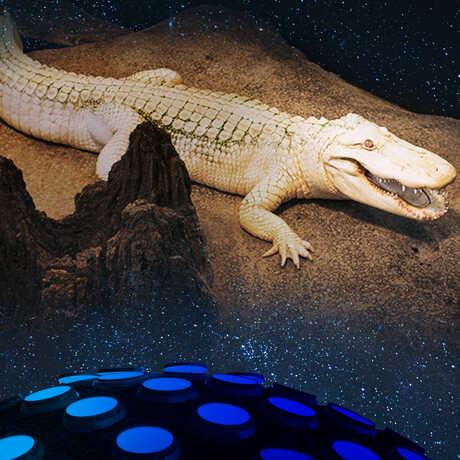 Explore the museum at night!