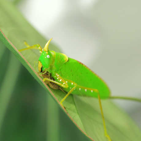 3D Earth: Rainforests katydid