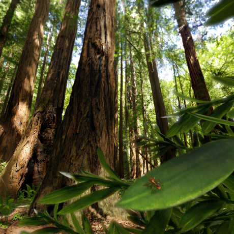 "A still from ""Life: A Cosmic Story"" showing a tiny ant dwarfed by a redwood tree"