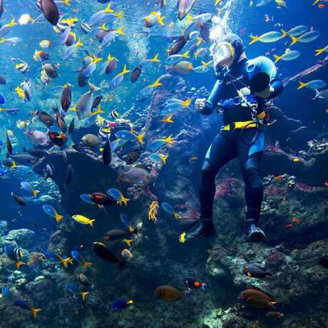 An Academy diver is swarmed by tropical fish in the Philippine Coral Reef exhibit