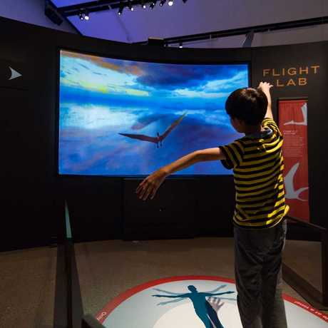 A child flies like a pterosaur in the Flight Lab simulator inside the Pterosaurs exhibit