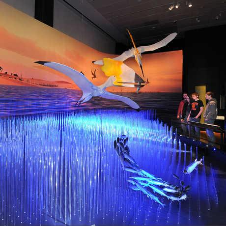 Cretaceous Sea Diorama photo © AMNH/R. Mickens
