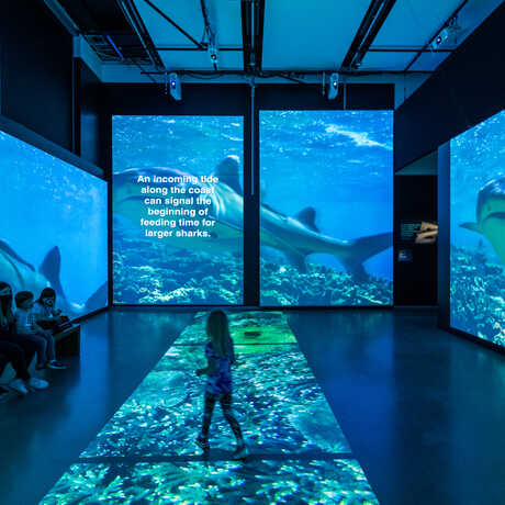 Guests inside Sharks exhibit projection gallery