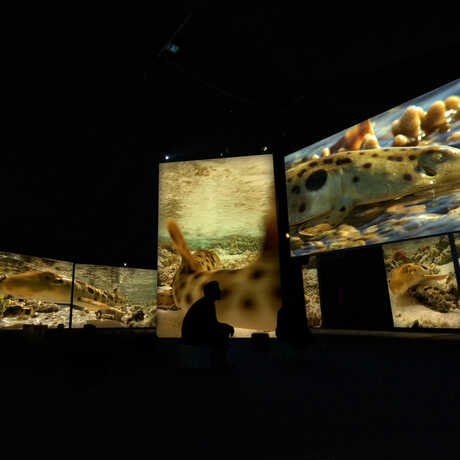 A guest sits in a darkened gallery with projections of shark footage on the walls