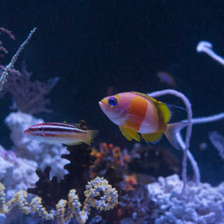 Events exhibits california academy of sciences for Twilight zone fish
