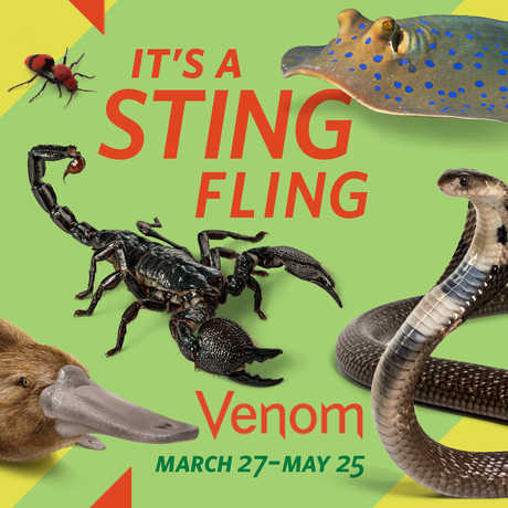 Sting Fling promotional poster featuring a colorful variety of venomous animals