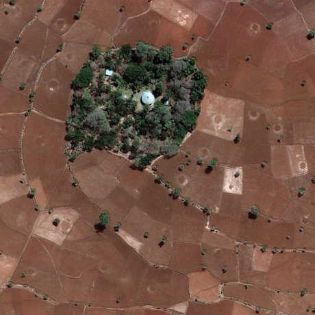 Church forest in Ethiopia